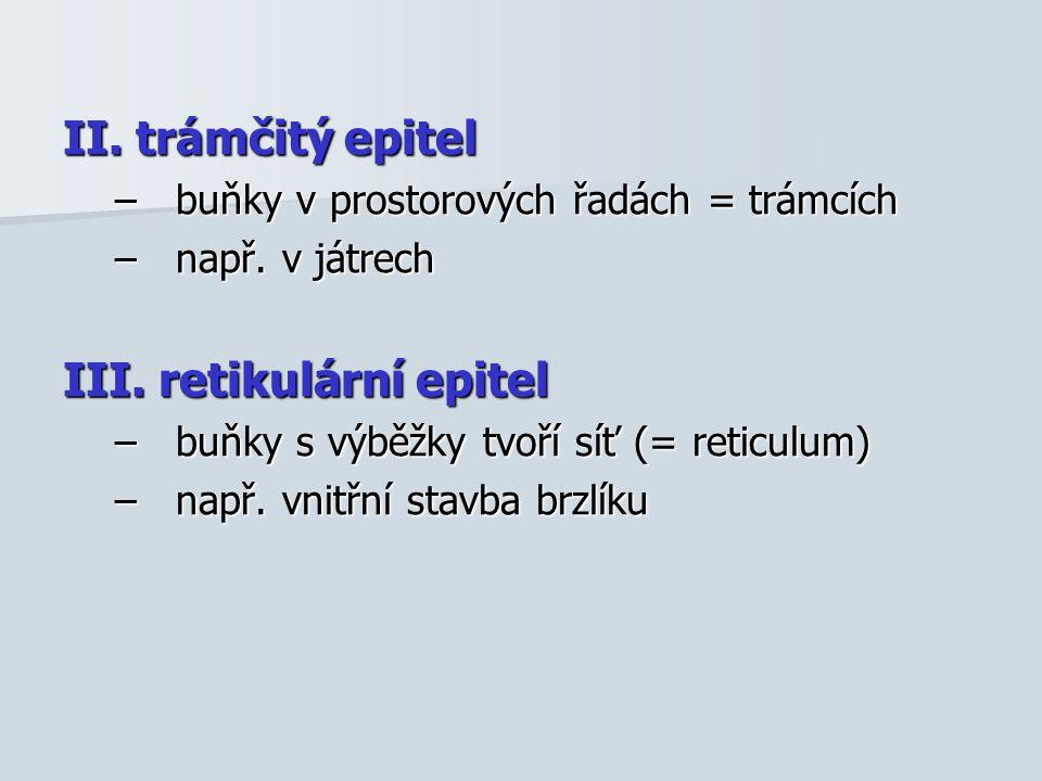 II. trámčitý epitel –buňky v prostorových řadách = trámcích –např. v játrech III. retikulární epitel –buňky s výběžky tvoří síť (= reticulum) –např. v