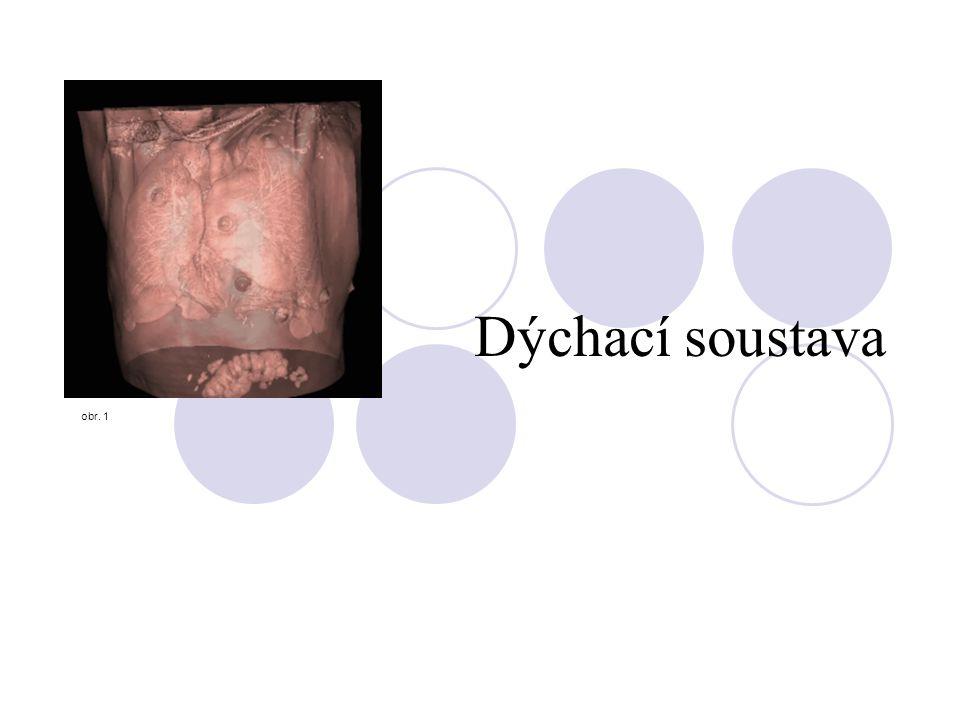 Dýchací soustava obr. 1