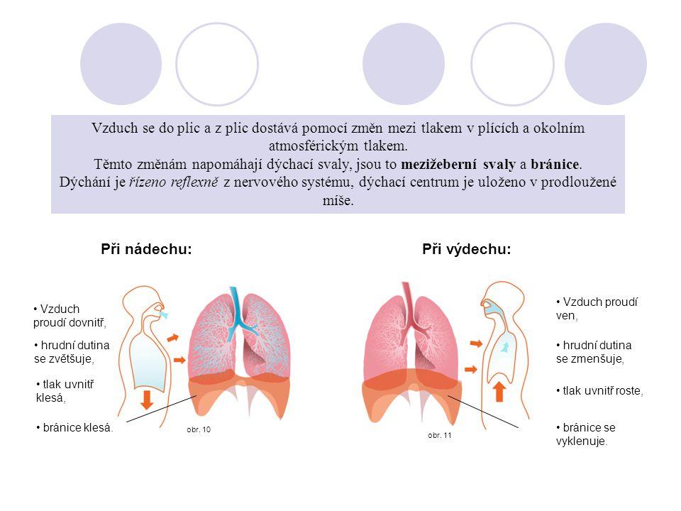 obr. 11 obr. 10 Zevní dýchání Vzduch se do plic a z dostává pomocí změn mezi tlakem v plících a okolním atmosférickým tlakem. Těmto změnám napomáhají