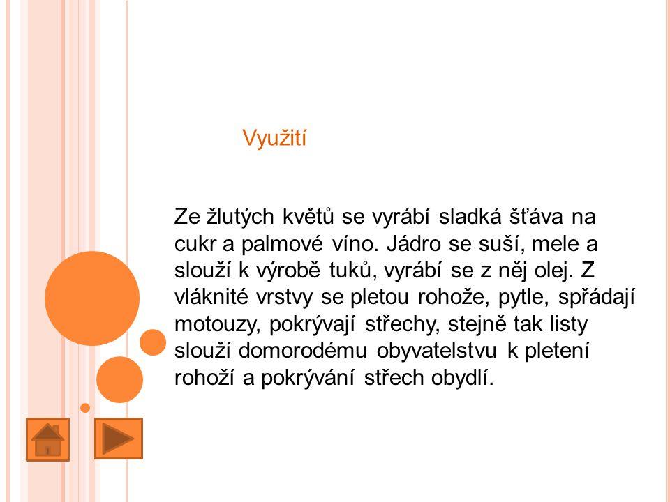 Využití Ze žlutých květů se vyrábí sladká šťáva na cukr a palmové víno.