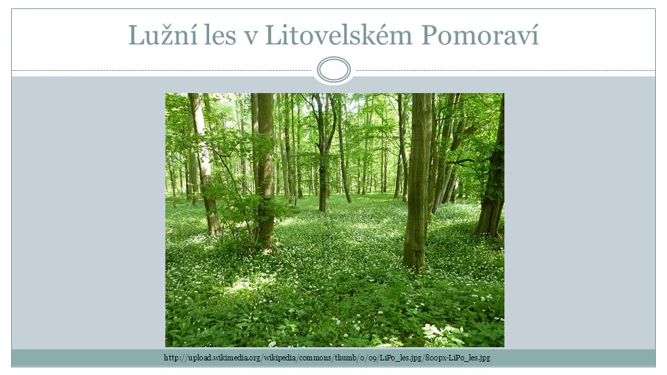 Lužní les v Litovelském Pomoraví http://upload.wikimedia.org/wikipedia/commons/thumb/0/09/LiPo_les.jpg/800px-LiPo_les.jpg