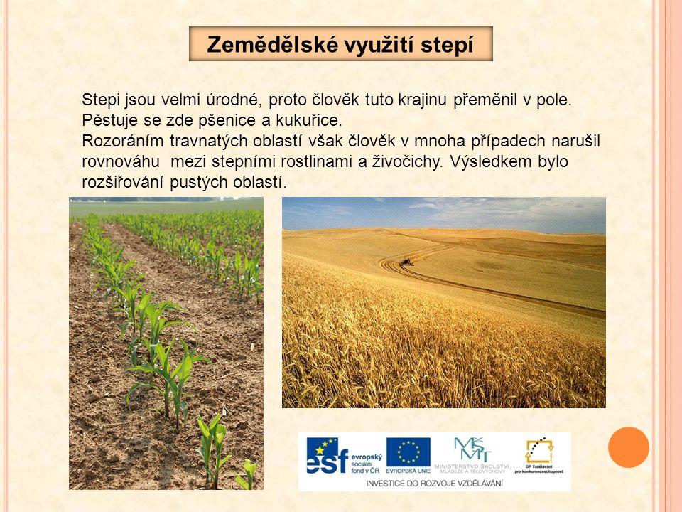 Zemědělské využití stepí Stepi jsou velmi úrodné, proto člověk tuto krajinu přeměnil v pole. Pěstuje se zde pšenice a kukuřice. Rozoráním travnatých o