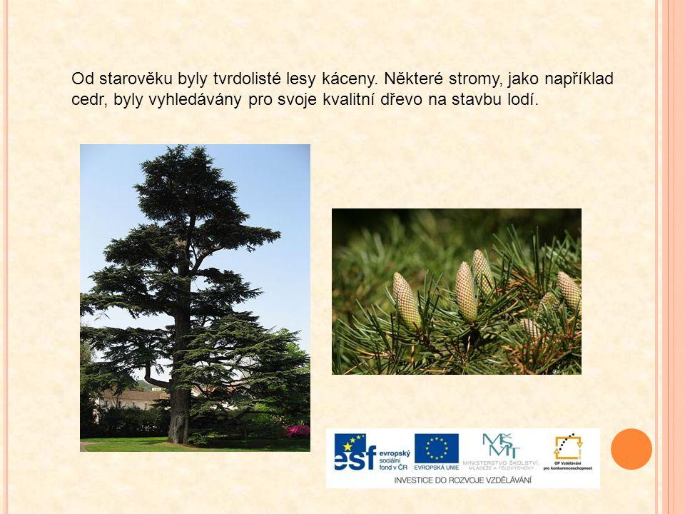 Od starověku byly tvrdolisté lesy káceny. Některé stromy, jako například cedr, byly vyhledávány pro svoje kvalitní dřevo na stavbu lodí.
