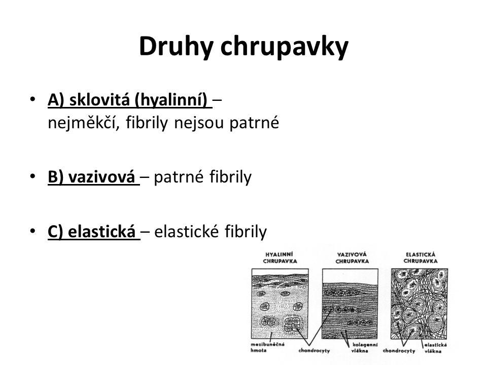 Druhy chrupavky A) sklovitá (hyalinní) – nejměkčí, fibrily nejsou patrné B) vazivová – patrné fibrily C) elastická – elastické fibrily
