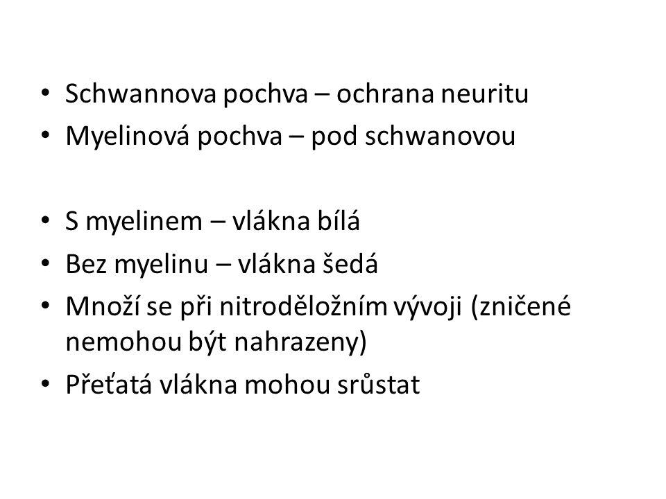 Schwannova pochva – ochrana neuritu Myelinová pochva – pod schwanovou S myelinem – vlákna bílá Bez myelinu – vlákna šedá Množí se při nitroděložním vý