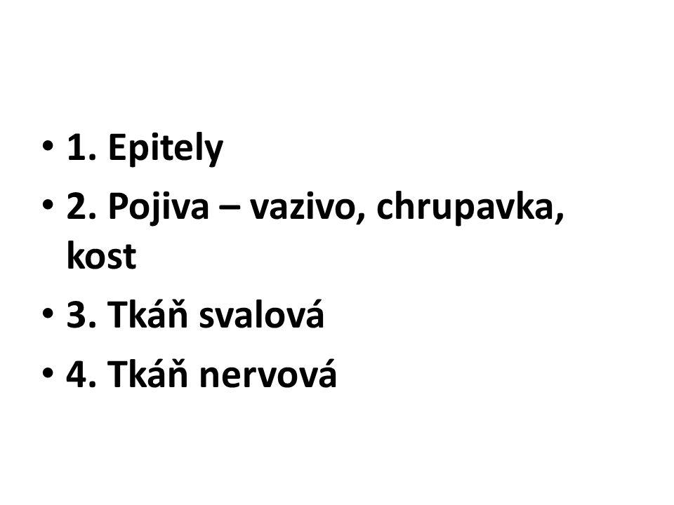 1. Epitely 2. Pojiva – vazivo, chrupavka, kost 3. Tkáň svalová 4. Tkáň nervová