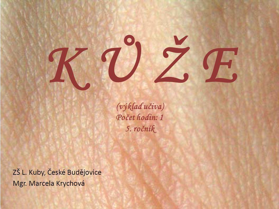 K Ů Ž E - pokrývá tělo a odděluje vnitřní prostředí organismu od vnějšího - pokud bychom se svlékly z kůže, zaujímala by plochu 1,6 - 1,8 m 2