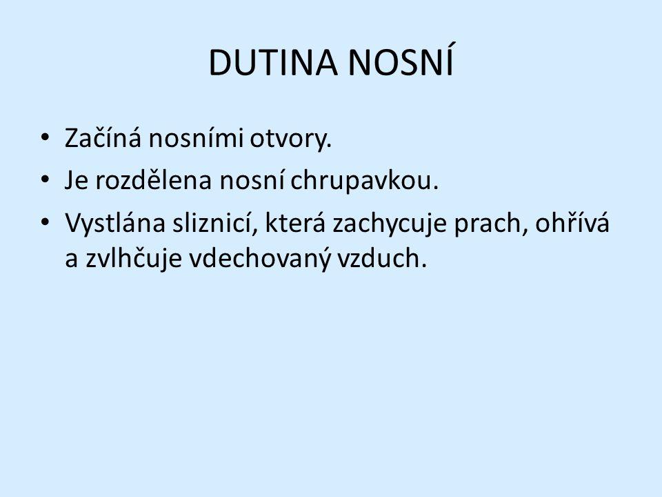 NOSOHLTAN Nosohltan je horní část hltanu.Kříží se zde trávicí a dýchací soustava.