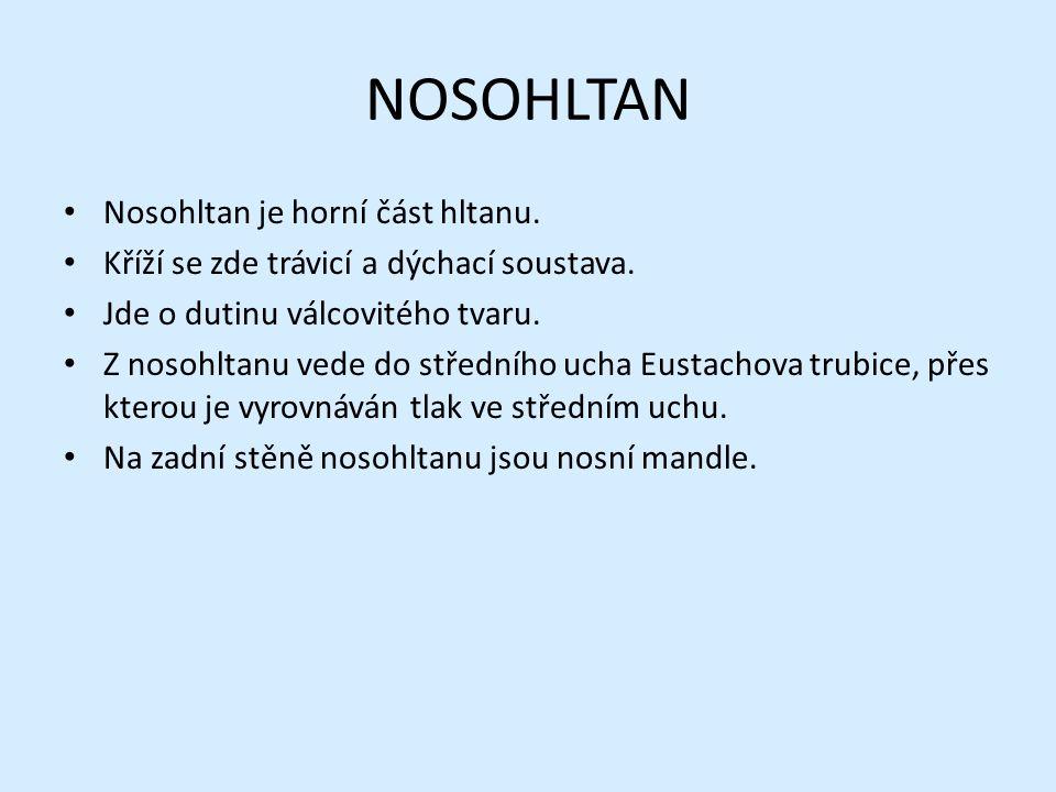 NOSOHLTAN Nosohltan je horní část hltanu. Kříží se zde trávicí a dýchací soustava. Jde o dutinu válcovitého tvaru. Z nosohltanu vede do středního ucha