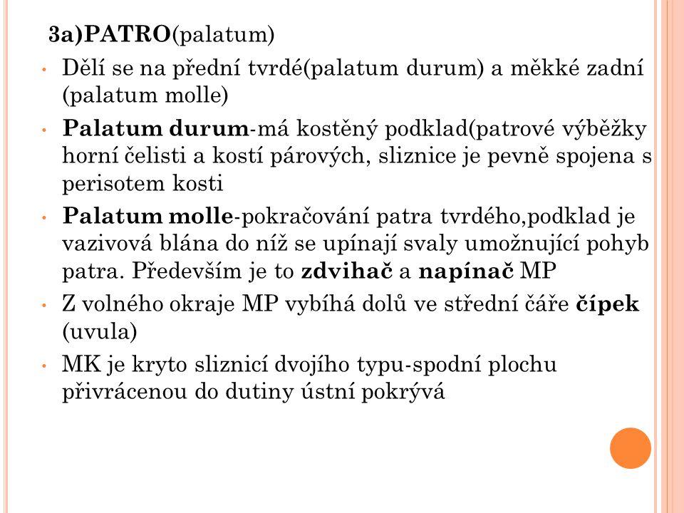 3a)PATRO (palatum) Dělí se na přední tvrdé(palatum durum) a měkké zadní (palatum molle) Palatum durum -má kostěný podklad(patrové výběžky horní čelist