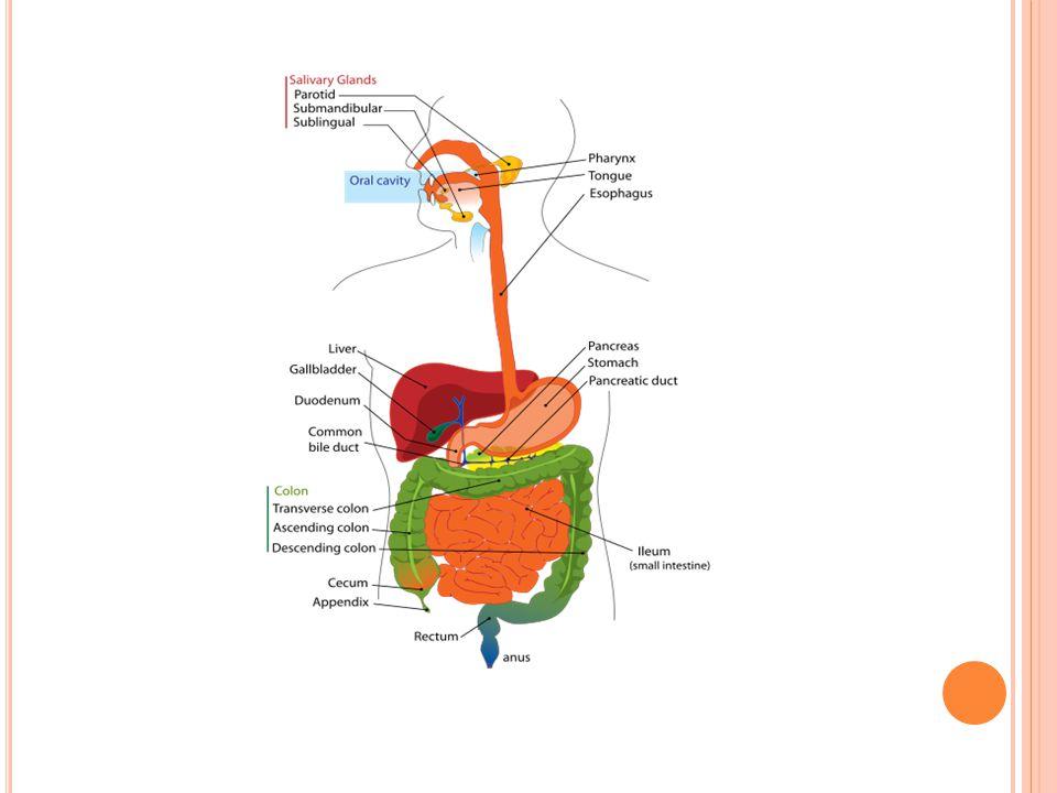 aby sousto vniklo do hrtanu Sliznice v nosohltanu je kryta epitelem cylindrickým řasinkovým(DC)s četnými buňkami vyměšující hlen Ve zbývajících dvou částech je mnohovrts.