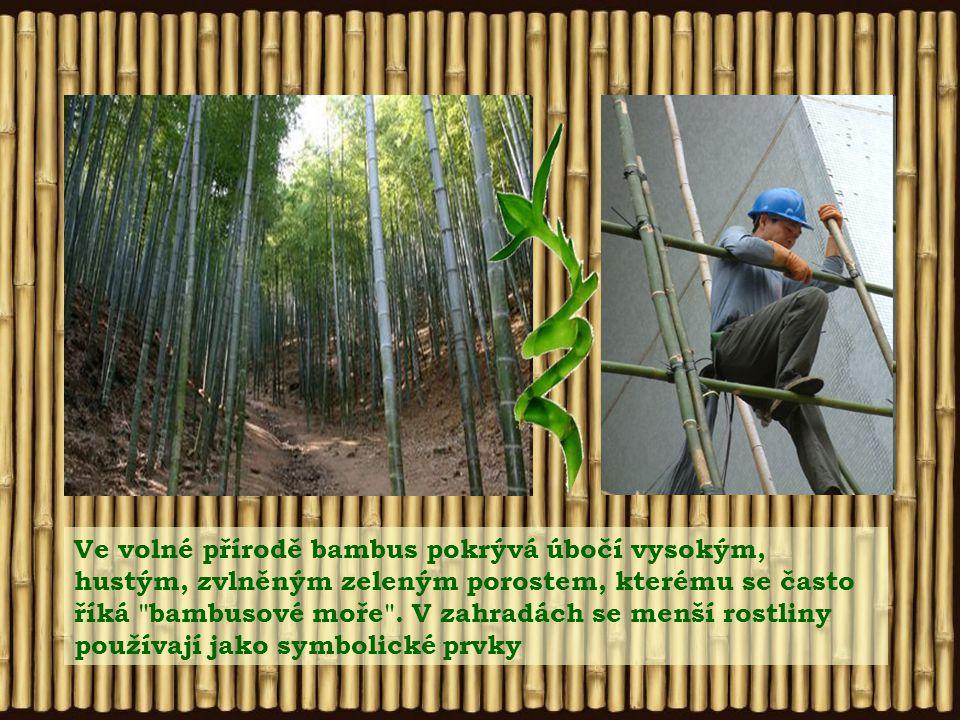 Bambus je rychle rostoucí, dlouhověký druh trávy, vyskytující se v celé střední a jižní Asii Nabízí širokou škálu využití. Zatímco ze stébel vznikají