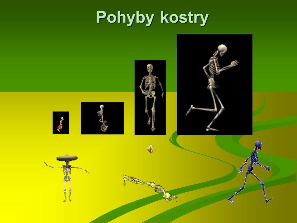 Popis kostry Kost nártní Kosti zanártní Kost lýtková Články prstů Kost patní