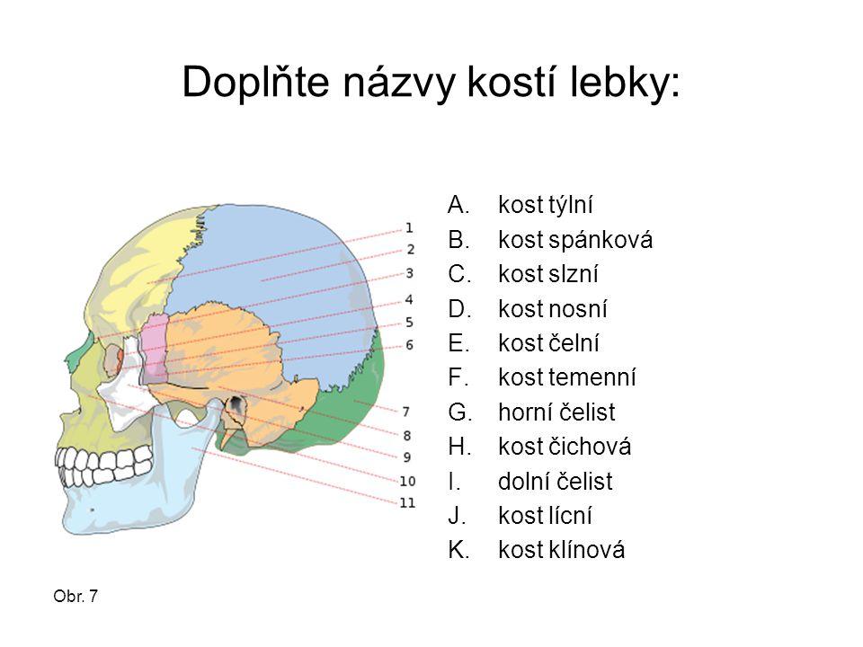Doplňte názvy kostí lebky: A.kost týlní B.kost spánková C.kost slzní D.kost nosní E.kost čelní F.kost temenní G.horní čelist H.kost čichová I.dolní če