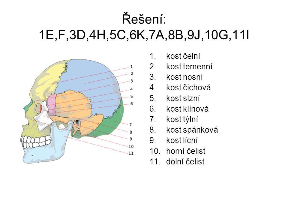 Řešení: 1E,F,3D,4H,5C,6K,7A,8B,9J,10G,11I 1.kost čelní 2.kost temenní 3.kost nosní 4.kost čichová 5.kost slzní 6.kost klínová 7.kost týlní 8.kost spán