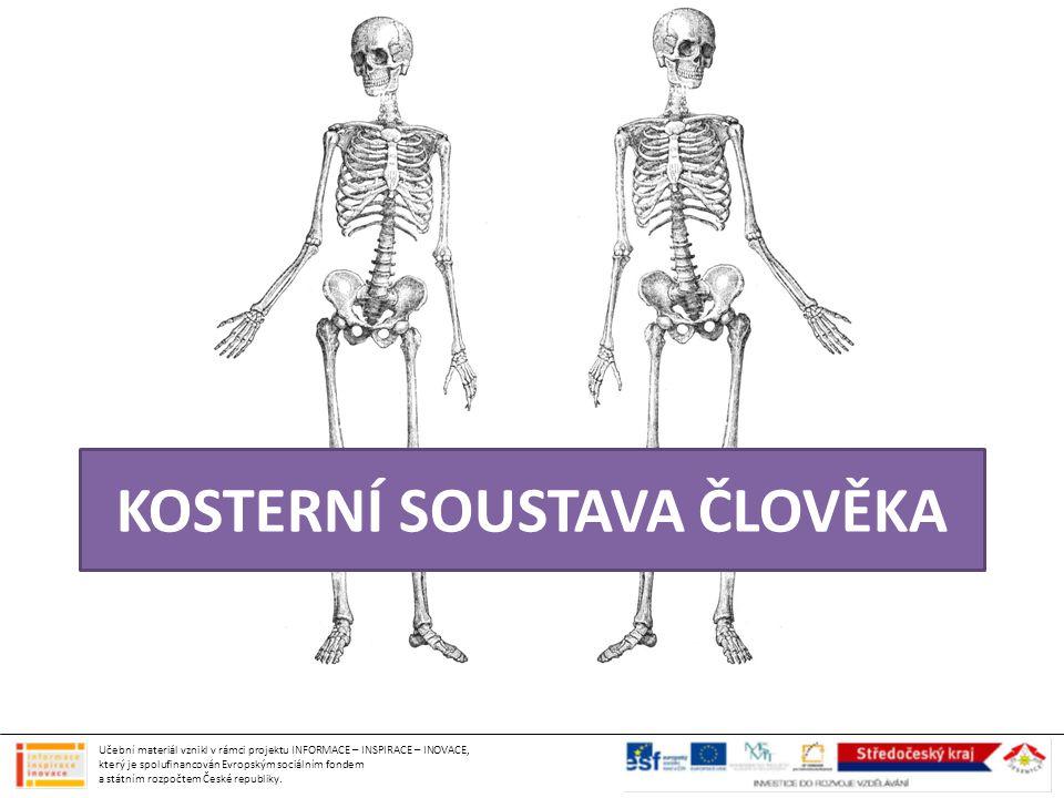 KOSTERNÍ SOUSTAVA ČLOVĚKA Učební materiál vznikl v rámci projektu INFORMACE – INSPIRACE – INOVACE, který je spolufinancován Evropským sociálním fondem