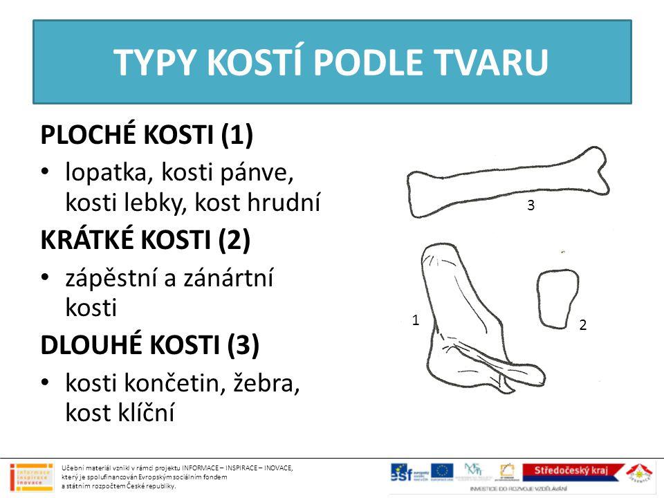 TYPY KOSTÍ PODLE TVARU PLOCHÉ KOSTI (1) lopatka, kosti pánve, kosti lebky, kost hrudní KRÁTKÉ KOSTI (2) zápěstní a zánártní kosti DLOUHÉ KOSTI (3) kos