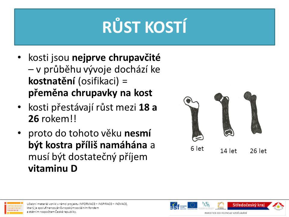 RŮST KOSTÍ kosti jsou nejprve chrupavčité – v průběhu vývoje dochází ke kostnatění (osifikaci) = přeměna chrupavky na kost kosti přestávají růst mezi