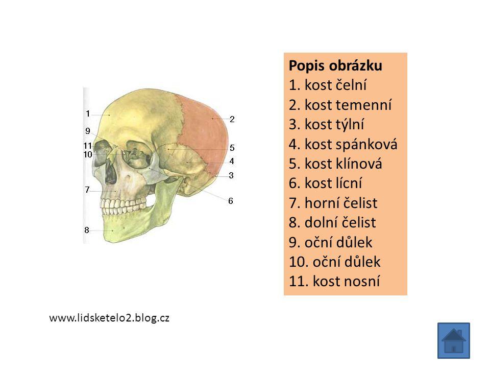 Popis obrázku 1. kost čelní 2. kost temenní 3. kost týlní 4. kost spánková 5. kost klínová 6. kost lícní 7. horní čelist 8. dolní čelist 9. oční důlek