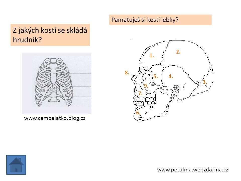 www.cambalatko.blog.cz Z jakých kostí se skládá hrudník? www.petulina.webzdarma.cz Pamatuješ si kosti lebky? 1. 2. 3. 4.5. 6. 7. 8. 9.