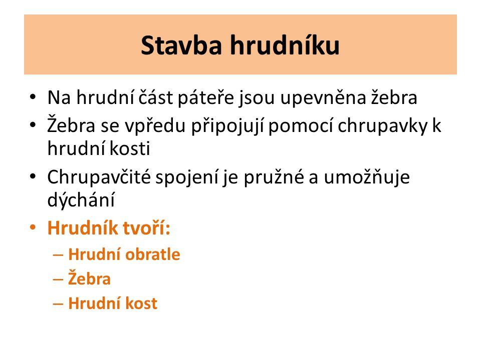 www.giobio.ic.cz