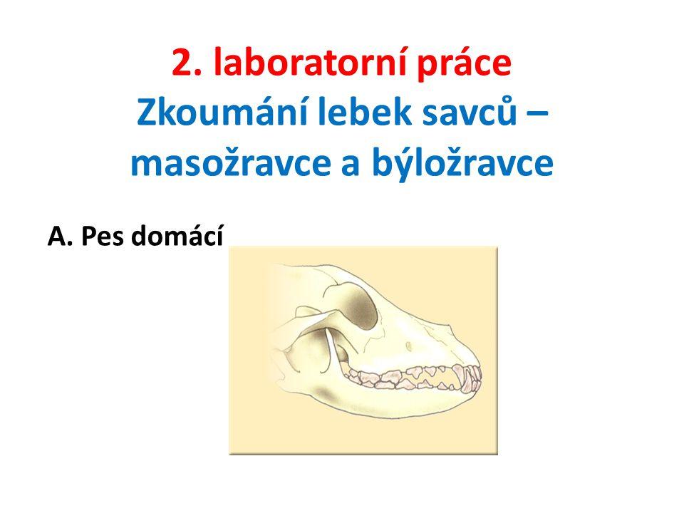 2. laboratorní práce Zkoumání lebek savců – masožravce a býložravce A. Pes domácí