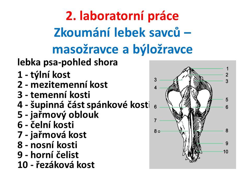 2. laboratorní práce Zkoumání lebek savců – masožravce a býložravce lebka psa-pohled shora 1 - týlní kost 2 - mezitemenní kost 3 - temenní kosti 4 - š