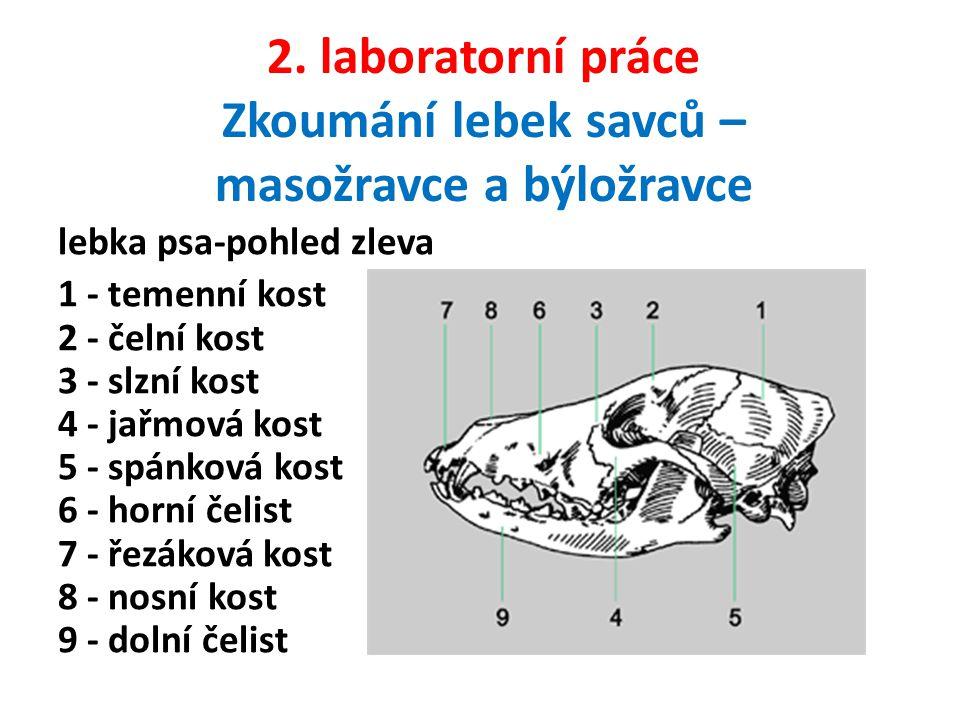 2. laboratorní práce Zkoumání lebek savců – masožravce a býložravce lebka psa-pohled zleva 1 - temenní kost 2 - čelní kost 3 - slzní kost 4 - jařmová