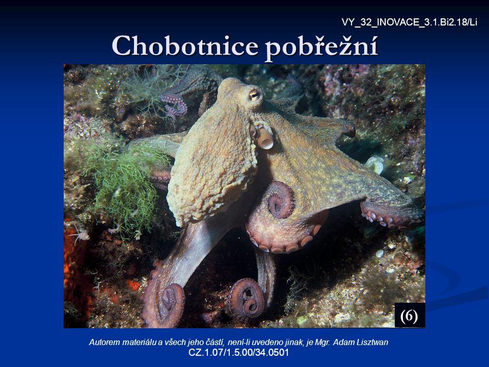 Chobotnice pobřežní (6) VY_32_INOVACE_3.1.Bi2.18/Li Autorem materiálu a všech jeho částí, není-li uvedeno jinak, je Mgr. Adam Lisztwan CZ.1.07/1.5.00/