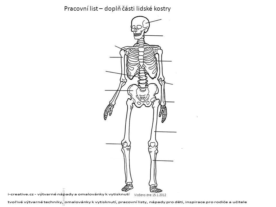 Pracovní list – doplň části lidské kostry Vloženo dne 15.1.2012