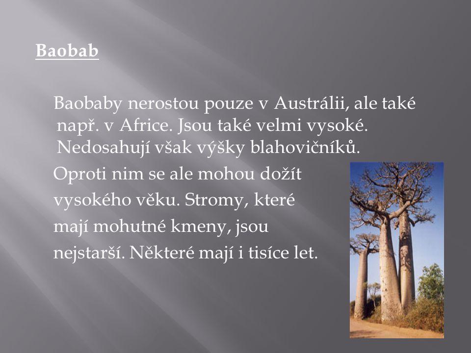 Baobab Baobaby nerostou pouze v Austrálii, ale také např. v Africe. Jsou také velmi vysoké. Nedosahují však výšky blahovičníků. Oproti nim se ale moho