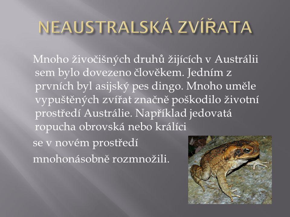 Mnoho živočišných druhů žijících v Austrálii sem bylo dovezeno člověkem. Jedním z prvních byl asijský pes dingo. Mnoho uměle vypuštěných zvířat značně