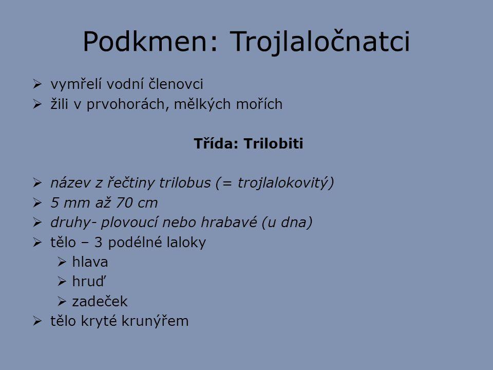 Podkmen: Trojlaločnatci  vymřelí vodní členovci  žili v prvohorách, mělkých mořích Třída: Trilobiti  název z řečtiny trilobus (= trojlalokovitý) 