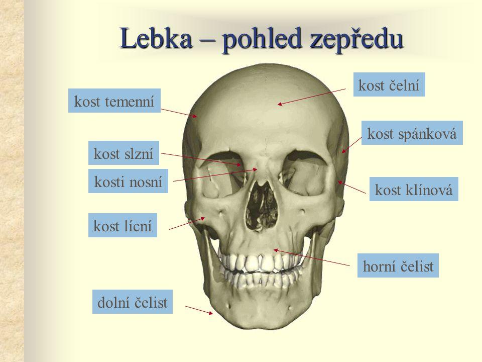 Lebka – pohled zepředu kost čelní dolní čelist horní čelist kost lícní kost klínová kost spánková kost temenní kosti nosní kost slzní