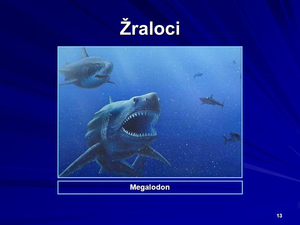 13 Žraloci Megalodon