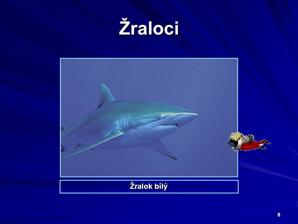 9 Žralok pozná oběť na velkou dálku.