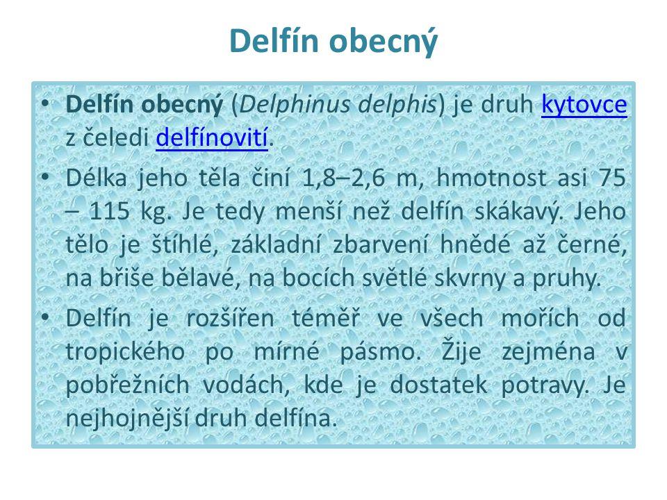 Delfín obecný Delfín obecný (Delphinus delphis) je druh kytovce z čeledi delfínovití.kytovcedelfínovití Délka jeho těla činí 1,8–2,6 m, hmotnost asi 75 – 115 kg.
