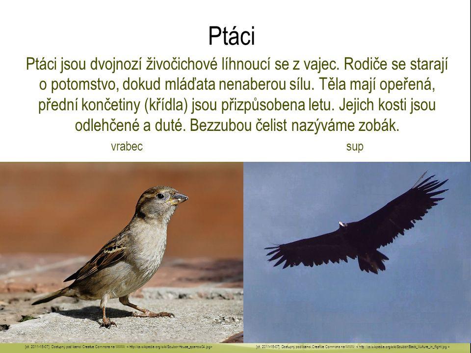 Ptáci Ptáci jsou dvojnozí živočichové líhnoucí se z vajec. Rodiče se starají o potomstvo, dokud mláďata nenaberou sílu. Těla mají opeřená, přední konč