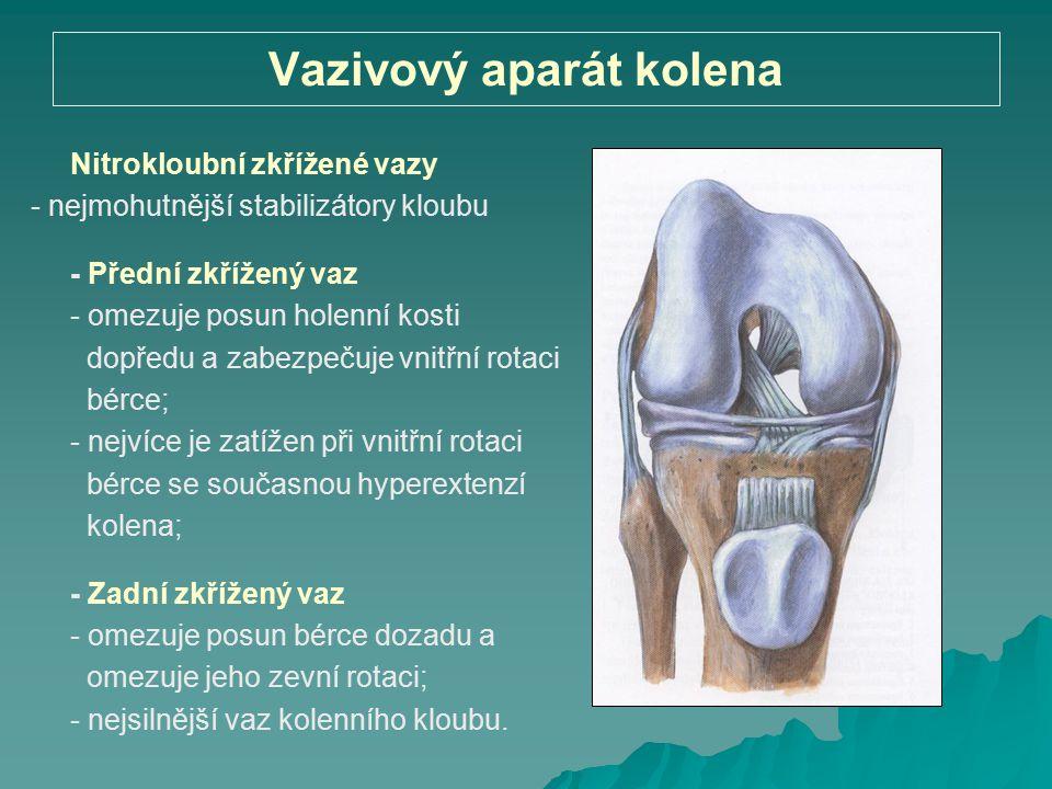 Vazivový aparát kolena Nitrokloubní zkřížené vazy - nejmohutnější stabilizátory kloubu - Přední zkřížený vaz - omezuje posun holenní kosti dopředu a z