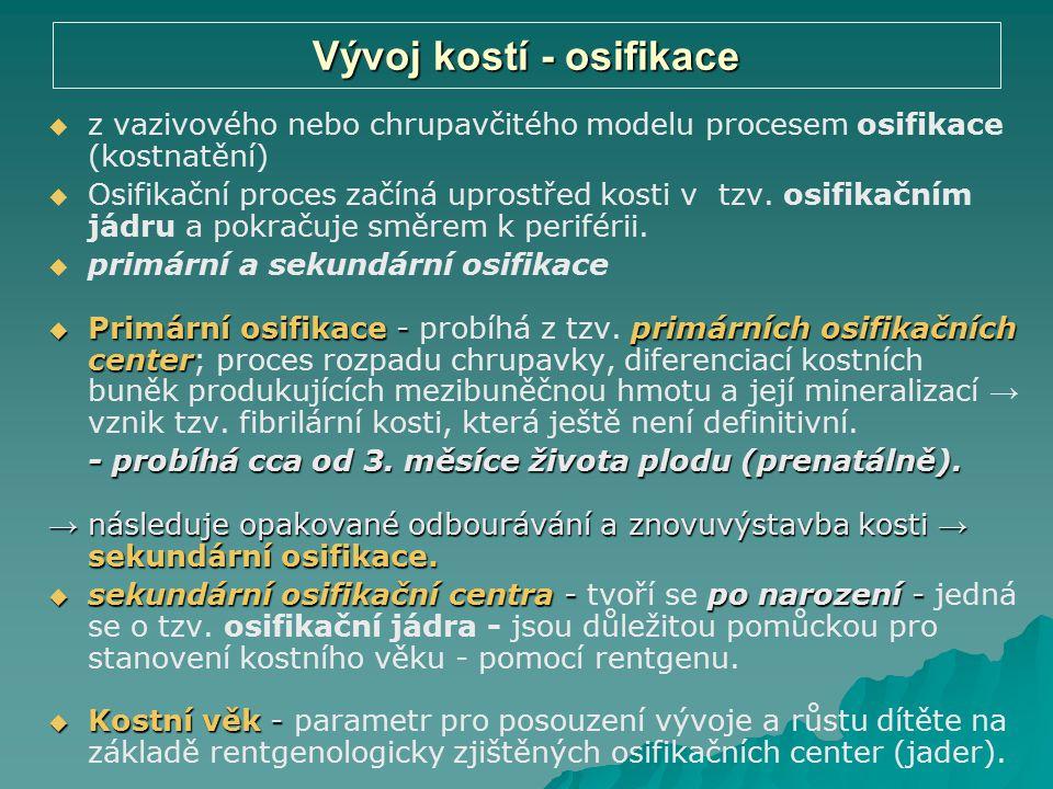 Vývoj kostí - osifikace   z vazivového nebo chrupavčitého modelu procesem osifikace (kostnatění)   Osifikační proces začíná uprostřed kosti v tzv.