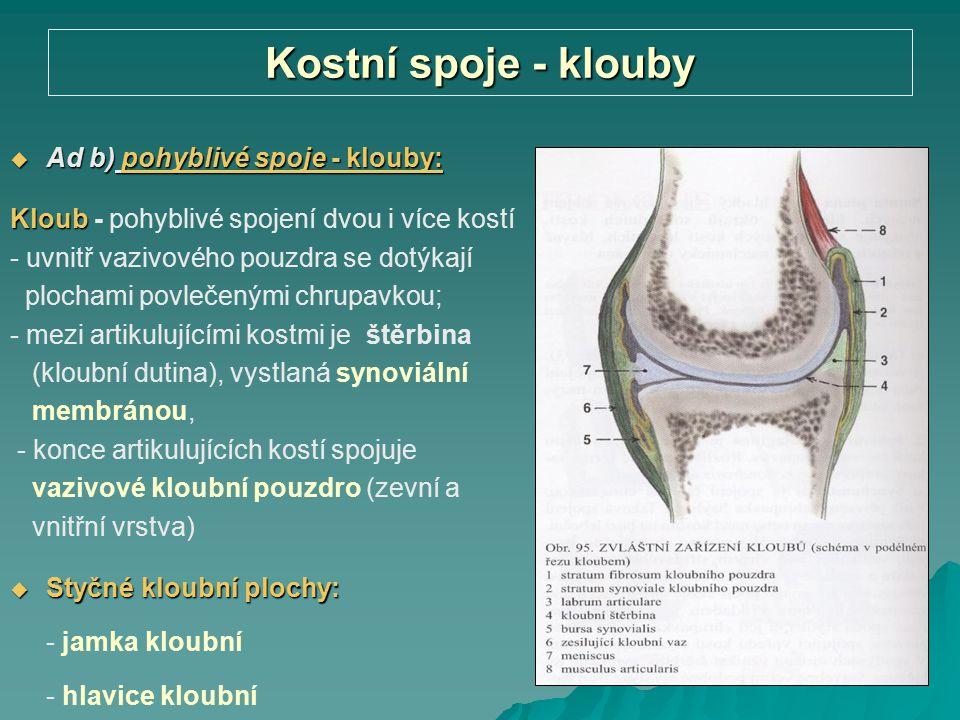 Kostní spoje - klouby  Ad b) pohyblivé spoje - klouby: Kloub Kloub - pohyblivé spojení dvou i více kostí - uvnitř vazivového pouzdra se dotýkají ploc