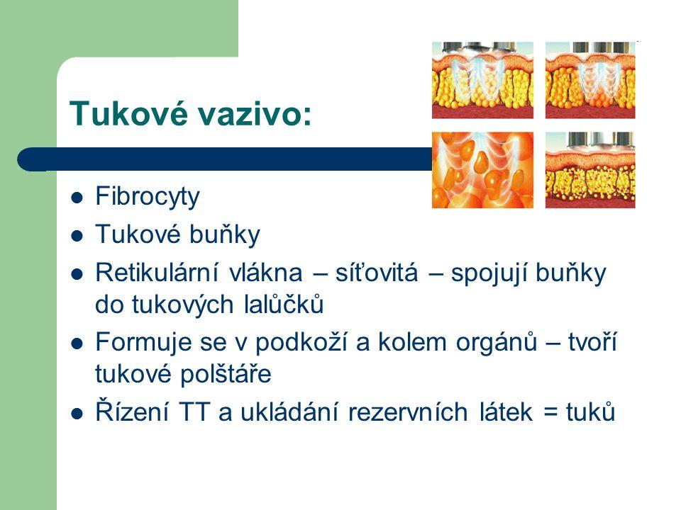 Tukové vazivo: Fibrocyty Tukové buňky Retikulární vlákna – síťovitá – spojují buňky do tukových lalůčků Formuje se v podkoží a kolem orgánů – tvoří tukové polštáře Řízení TT a ukládání rezervních látek = tuků
