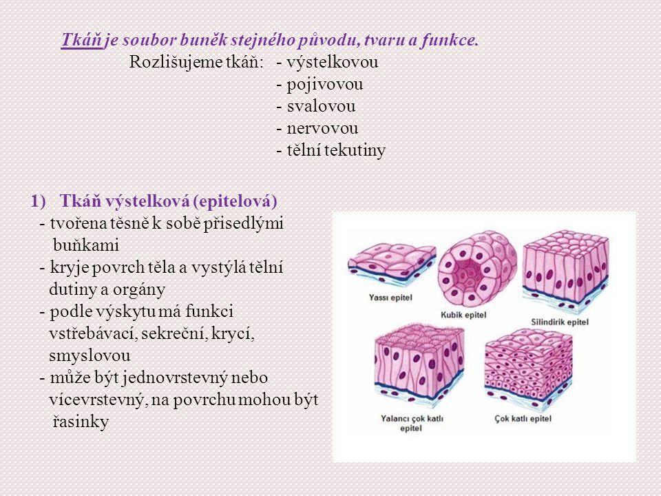 Tkáň je soubor buněk stejného původu, tvaru a funkce. Rozlišujeme tkáň: - výstelkovou - pojivovou - svalovou - nervovou - tělní tekutiny 1) Tkáň výste