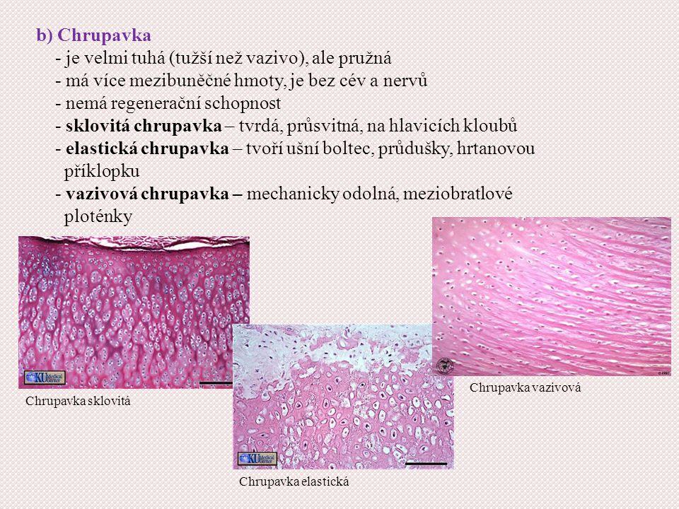 b) Chrupavka - je velmi tuhá (tužší než vazivo), ale pružná - má více mezibuněčné hmoty, je bez cév a nervů - nemá regenerační schopnost - sklovitá chrupavka – tvrdá, průsvitná, na hlavicích kloubů - elastická chrupavka – tvoří ušní boltec, průdušky, hrtanovou příklopku - vazivová chrupavka – mechanicky odolná, meziobratlové ploténky Chrupavka sklovitá Chrupavka elastická Chrupavka vazivová