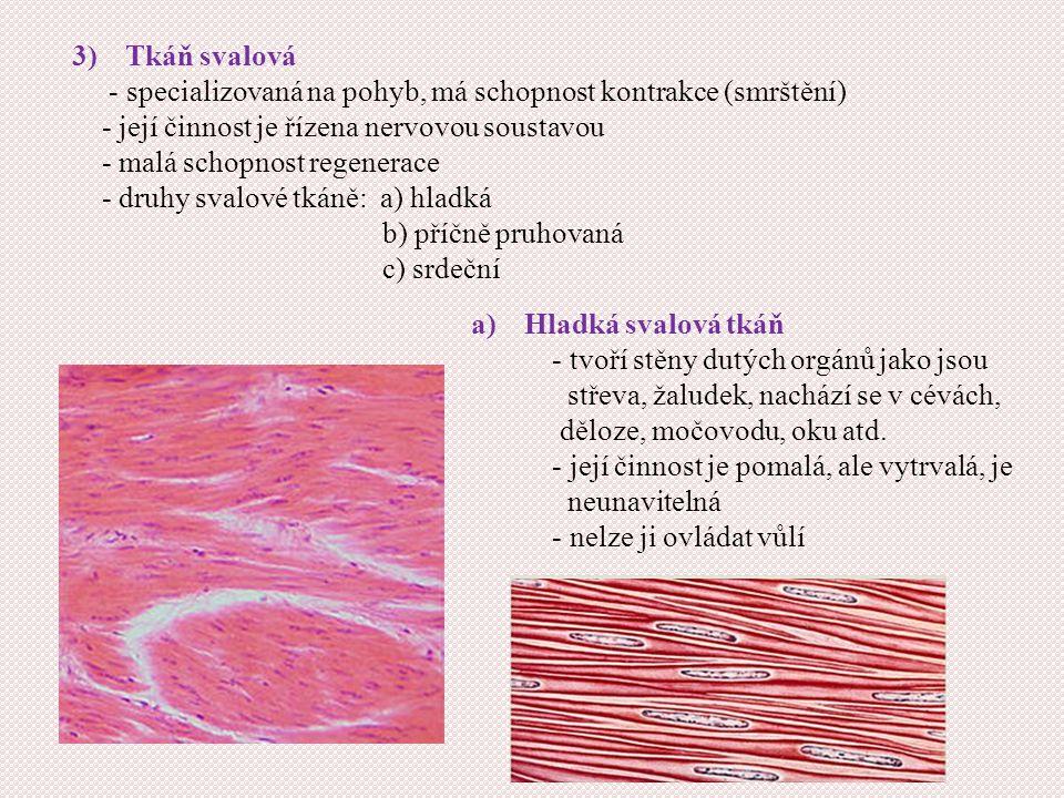 3)Tkáň svalová - specializovaná na pohyb, má schopnost kontrakce (smrštění) - její činnost je řízena nervovou soustavou - malá schopnost regenerace - druhy svalové tkáně: a) hladká b) příčně pruhovaná c) srdeční a)Hladká svalová tkáň - tvoří stěny dutých orgánů jako jsou střeva, žaludek, nachází se v cévách, děloze, močovodu, oku atd.