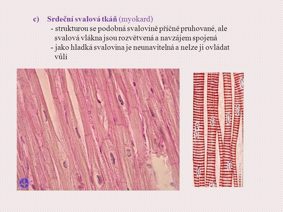 c)Srdeční svalová tkáň (myokard) - strukturou se podobná svalovině příčně pruhované, ale svalová vlákna jsou rozvětvená a navzájem spojená - jako hladká svalovina je neunavitelná a nelze ji ovládat vůlí