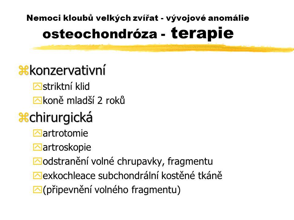 Nemoci kloubů velkých zvířat - vývojové anomálie osteochondróza - terapie zkonzervativní ystriktní klid ykoně mladší 2 roků zchirurgická yartrotomie yartroskopie yodstranění volné chrupavky, fragmentu yexkochleace subchondrální kostěné tkáně y(připevnění volného fragmentu)