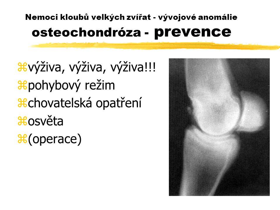 Nemoci kloubů velkých zvířat - vývojové anomálie osteochondróza - prevence zvýživa, výživa, výživa!!! zpohybový režim zchovatelská opatření zosvěta z(