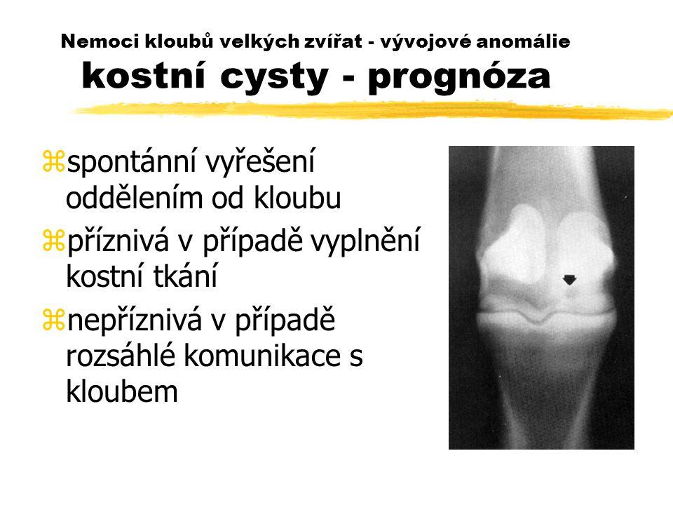 Nemoci kloubů velkých zvířat - vývojové anomálie kostní cysty - prognóza zspontánní vyřešení oddělením od kloubu zpříznivá v případě vyplnění kostní tkání znepříznivá v případě rozsáhlé komunikace s kloubem