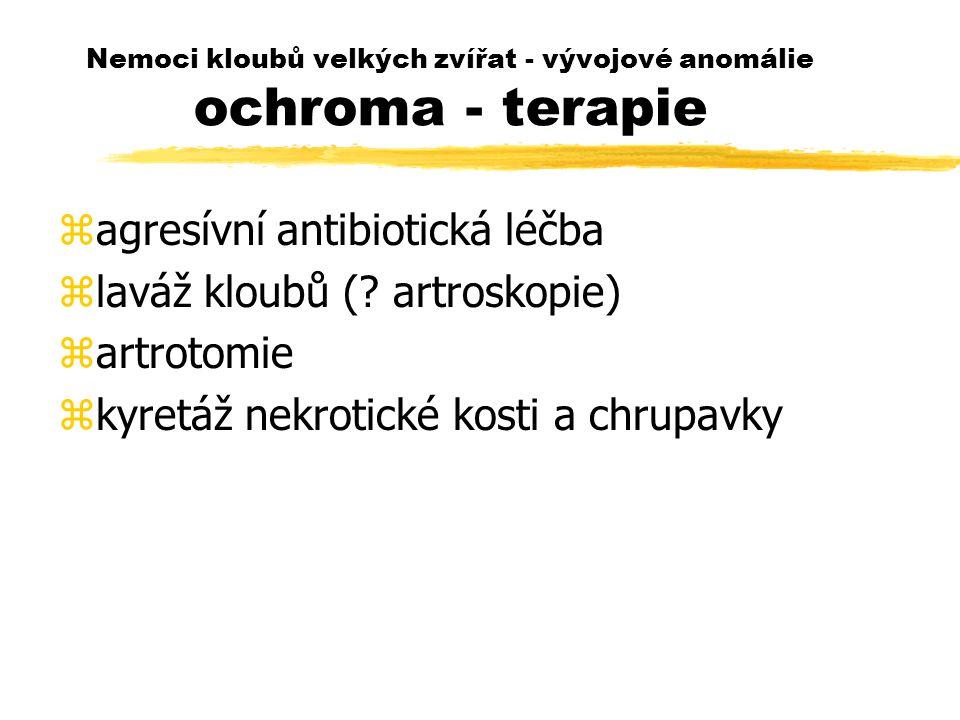 Nemoci kloubů velkých zvířat - vývojové anomálie ochroma - terapie zagresívní antibiotická léčba zlaváž kloubů (? artroskopie) zartrotomie zkyretáž ne